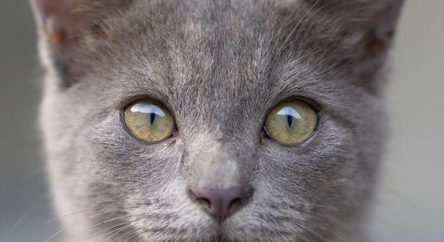 Les meilleurs croquettes pour votre chat